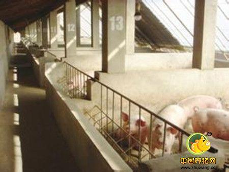 冬季养猪掌控五个环节是怎样的