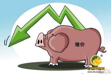 猪价总会跌的 下跌时如何应对?
