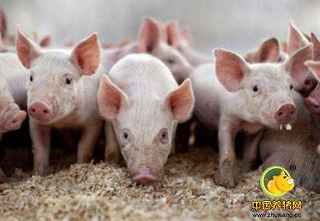 猪已跌肉还涨!屠宰企业满满都是套路!