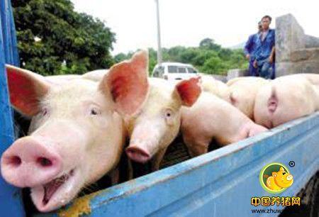 养猪将产能过剩,猪场未建好下一轮竞争已打响