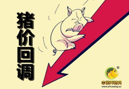 屠宰企业收购顺畅 北方局部猪价出现回调
