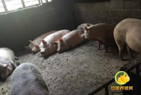 猪场粪便污水处理设施的几种形式