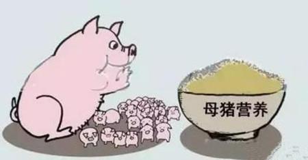 养猪骗局大揭秘 你还被蒙在鼓里吗?