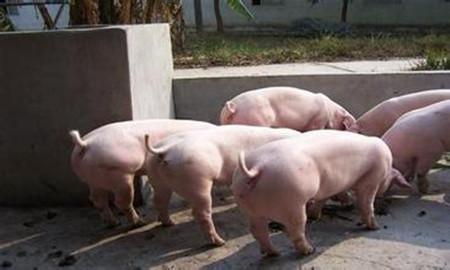 外购仔猪多大体重、多少价格出栏才不会亏本?