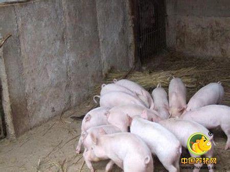 猪病的发生原因分析及防治措施