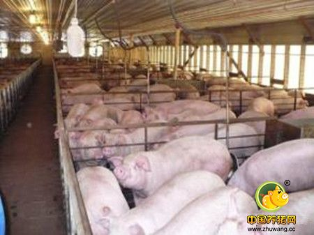 冬季养猪场防寒保暖教你10招