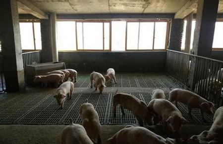 农村小伙乡下盖了一栋楼,而楼里住的却全是猪