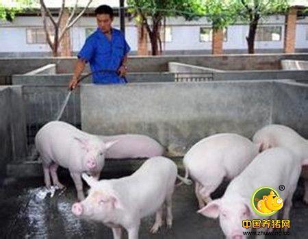 养猪的废水的危害及一些处理方案