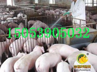 江苏三元仔猪价格教您秋季养猪需要谨防猪急性肌肉风湿病