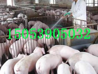 河北三元仔猪价格分享秋季猪病多防疫要早抓