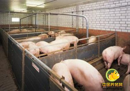 猪舍设计要求与各猪舍的面积