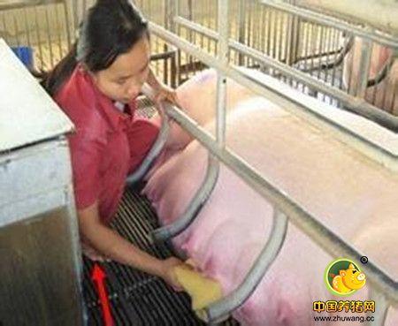 如何实现母猪PSY35?看他们是怎么做到的!