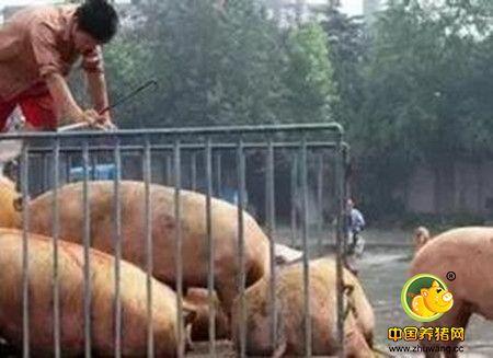 猪场必须遵守的猪病防治原则,超实用!