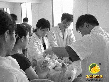 中国科学院:辣椒炒肉好吃源于对猪肉品质的挑剔