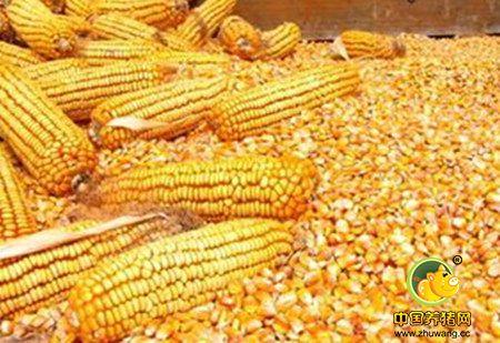农业部:严防转基因玉米水稻大豆种子冒充非转基因