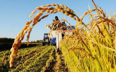 多项农业金融创新措施将出 助推农业供给侧改革