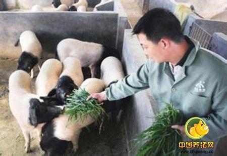 优良种猪精液供应可追溯系统研究