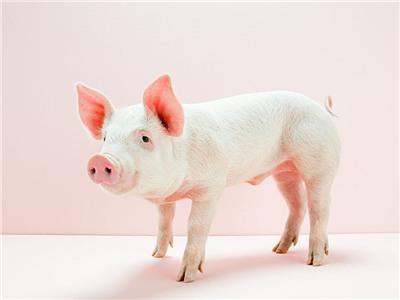 2017年1月17日(20至30公斤)仔猪价格行情走势