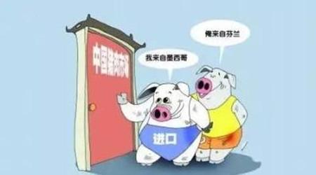 新买进生猪注意事项 买进前后都得下小心
