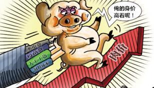 春节临近猪价飞涨,这年该怎么过?