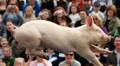 每天关注猪价的你!不想看看2017年是否还能盈利?
