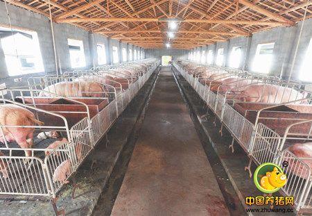 养猪场如何来做好产房温湿度控制?