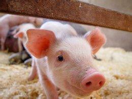 4月份第4周畜产品和饲料集贸市场价格情况