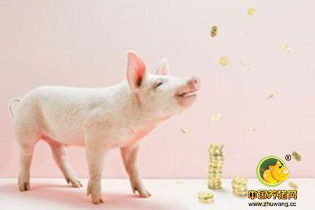 养猪新四化 2017年这样养猪才能赚钱
