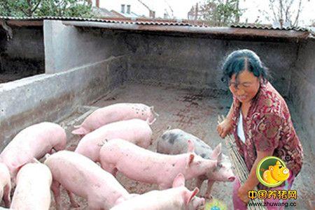 猪场抑制饲料成本的5种方法