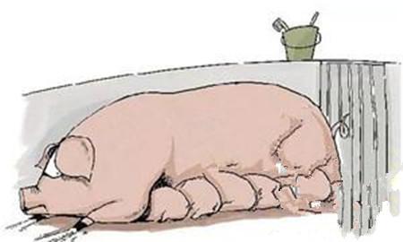 母猪生育力指示剂:第二胎综合征