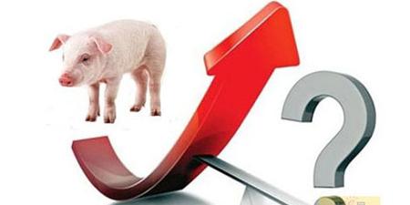 屠企提量压价,猪场出栏增加,猪价会一直跌到过年?