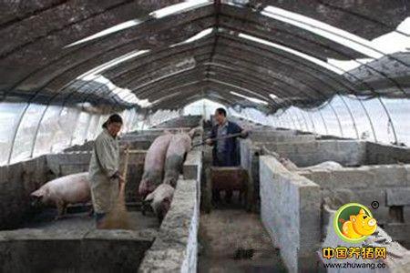 塑料大棚养猪容易出问题的地方