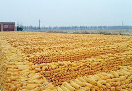 中国玉米去库存任重而道远