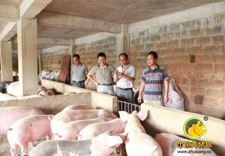 又有新人加入养猪业 今年养猪还能不能赚钱