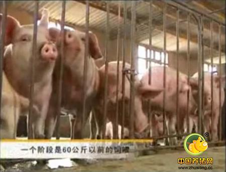 养猪技术,滇陆猪的育成猪育肥猪的饲养管理