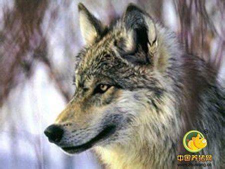 打造一支纪律严明的狼性团队
