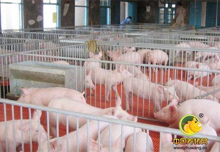 一个个无底洞正在侵吞猪场的利润,你中招了嘛?
