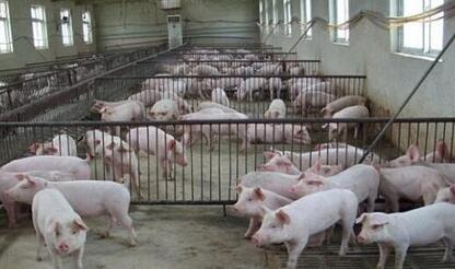 泰国畜牧厅称严控春节肉制品药物残留超标