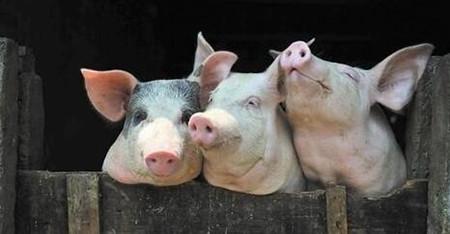 国家发改委:预计全年生猪价格总体呈高位趋降走势