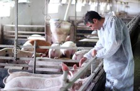 农业部办公厅印发《2017年兽医工作要点》