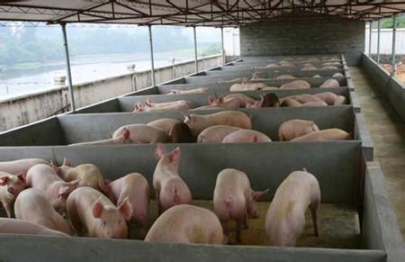 养猪品种的选择==养殖户的经济效益?