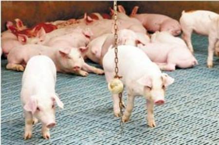 猪场为什么产子少,怎样做才能让猪场的产子率上来呢,答案在这里