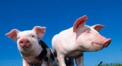 一周综述:假期结束,需求疲软,但猪价不会大跌