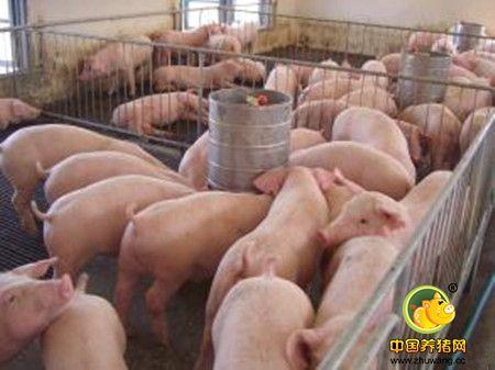 猪场浪费的账你算过吗?教你降低成本少花冤枉钱!