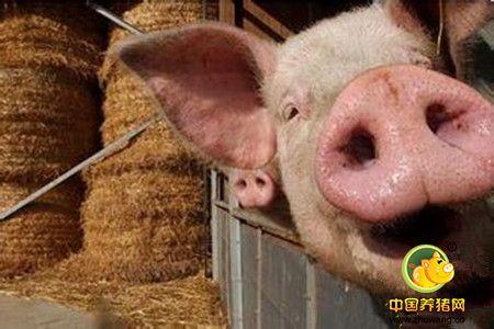 宠辱不惊,养猪人6招应对猪周期