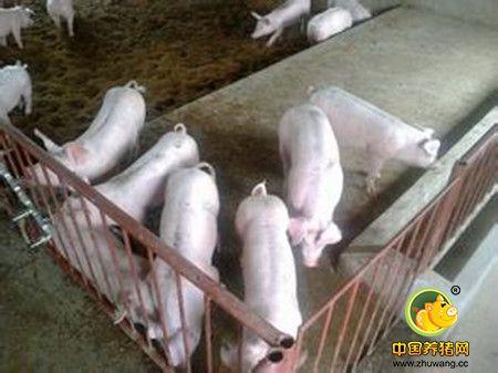 猪场粪污轻松解决,堆肥、发酵床、干清粪、沼气池……还可以这样搞