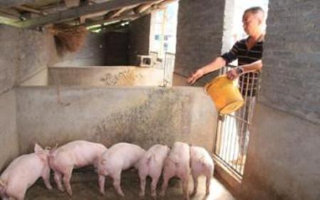中小型养猪场的免疫到底应该怎么做?专家来告诉你!