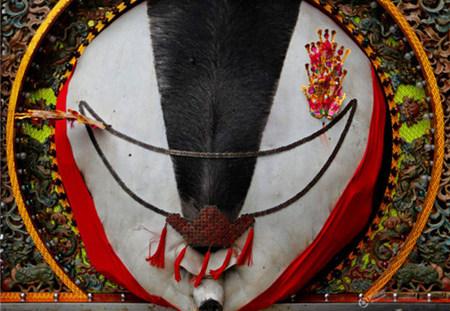 台湾神猪祭:1700斤肥猪夺魁后被宰杀游街