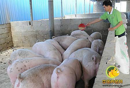 仔猪体质差调整的方法,如何增强仔猪的体质?
