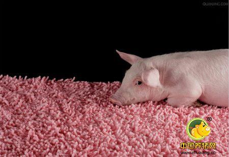 配合饲料加工工艺对产品质量的影响